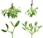Mistletoe set — Stock Photo