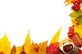 孤立在白色的秋季元素边框 — 图库照片