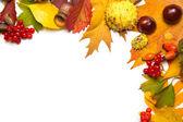Autumn elements border isolated on white — Stock Photo
