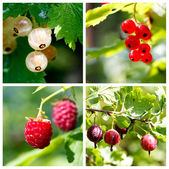 Ripe summer berries collage — Stock Photo