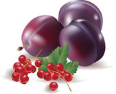 Currant, plum, isolated — Stock Vector