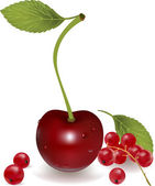 Cherry, currant — Stock Vector