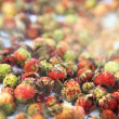 Strawberries on a light background. Wild berries. Close-up - Stock Photo