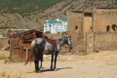 Crimea, Sudak, Horse at ancient castle — Stock Photo