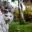 Cat behind tree - Stock Photo