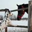 Foto Stock: Dog and horse