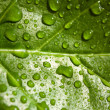 Green leaf - Stock Photo