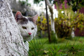 Cat behind tree — Stock Photo