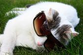 кот в очках — Стоковое фото