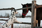 Dog and horse — Stock Photo