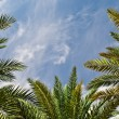 Palms and sky — Stock Photo