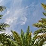 Palms and sky — Stock Photo #11440270