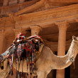 Camel against treasury - Stock Photo