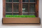 Old window with grass in box — Stock Photo