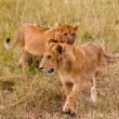 Lion cubs — Stock Photo #11509389