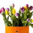 Close up image of colorful tulips - Stock Photo
