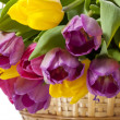 Beautiful tulip flowers - Stock Photo