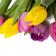 Pretty colorful tulips — Stock Photo