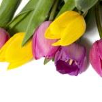 Pretty colorful tulips — Stock Photo