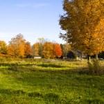 Orange tree on a farm — Stock Photo