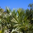 Palm Plants — Stock Photo