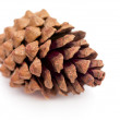 Pinecone on White — Stock Photo