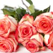 Stock Photo: Pink rose bunch