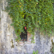 Plants on a concrete wall with open window — Stock Photo