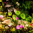 Stock Photo: Quaint Garden Scene