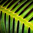 Skeletal Fern — Stockfoto