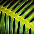 Stock Photo: Skeletal Fern