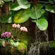 Small orchid waterfall - Stock Photo