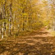 Stock Photo: Shadowy trail in ontario