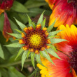 Stock Photo: Spikey Red and Yellow Flowers