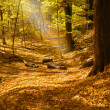 Sunbeam in forest — Stok fotoğraf