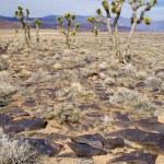 trois cactus — Photo #11725932