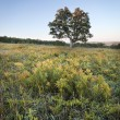 Tree in meadow - Stockfoto