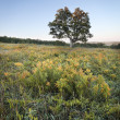 Tree in meadow - Stock Photo
