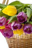 Beautiful tulip flowers — Stock Photo