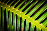 Skeletal Fern — Stock Photo
