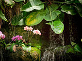 Small orchid waterfall — Stock Photo