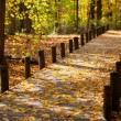Stock Photo: Walkway and maple leaves