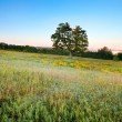 Single tree in meadow - Stockfoto