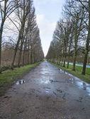 Wet path — Stock Photo