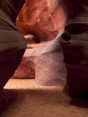 Image of canyon antelope — Stock Photo
