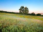 単一のツリーの牧草地で — ストック写真
