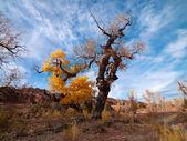 Tree turning in autumn — Stock Photo
