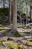 Trees and moss in sunlight — Stock Photo