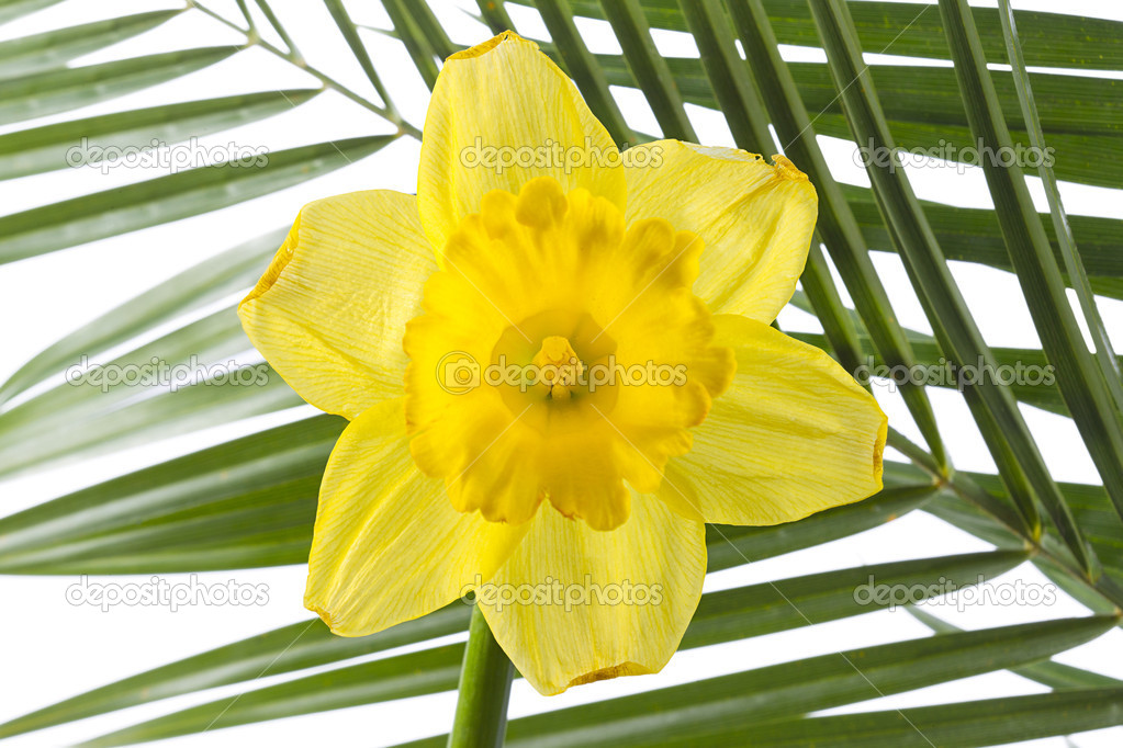 Yellow flower and palm leaf — Stock Photo #11739351
