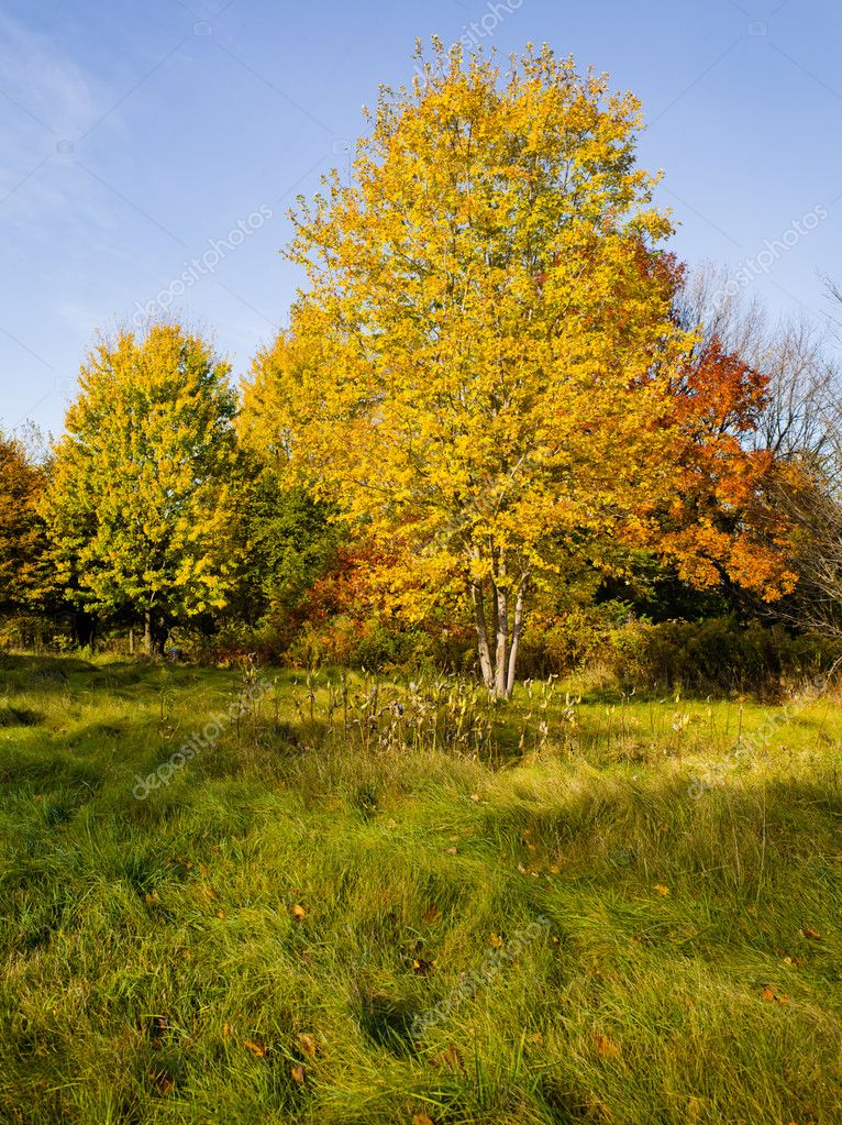 Colorful trees  Stock Photo #11739410